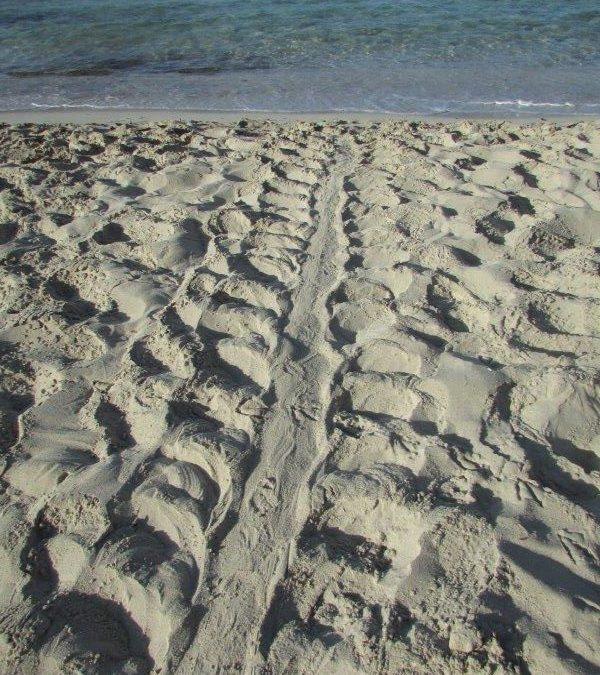 Spiaggia dei Conigli di Lampedusa: menzione speciale per gli interventi di recupero del paesaggio.