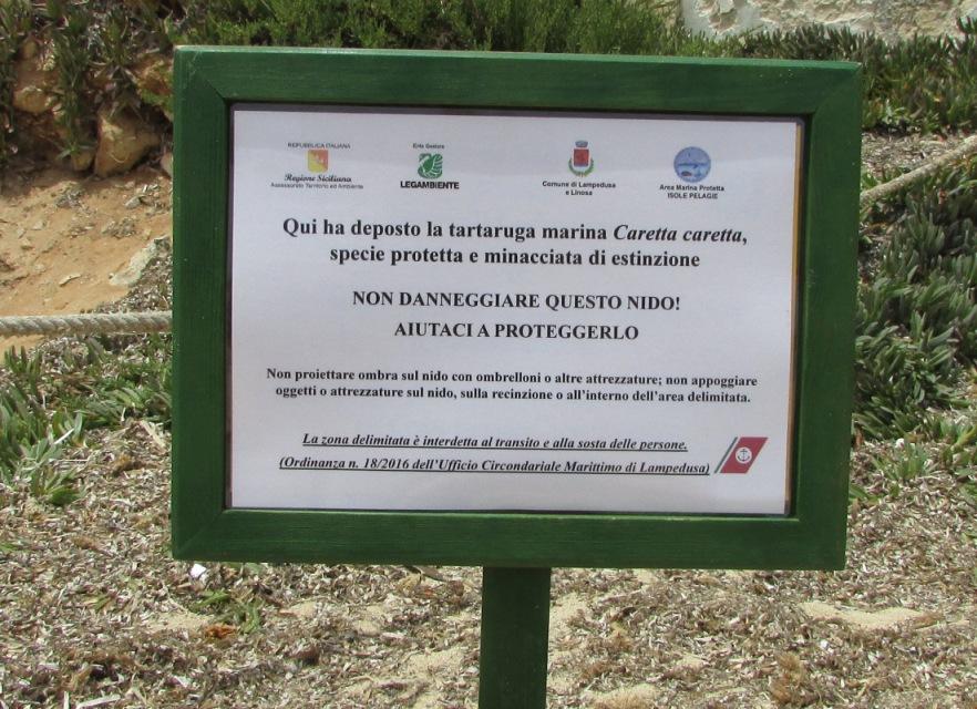 LAMPEDUSA: LA TARTARUGA MARINA CARETTA CARETTA HA DEPOSTO NELLA SPIAGGIA DI CALA PISANA.